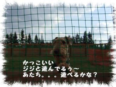20071107200522.jpg