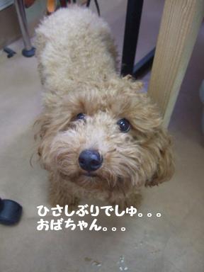 2007 11 19 モコちゃんカット①