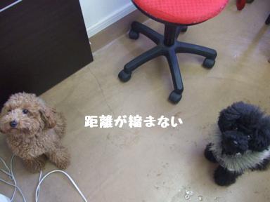 2007 11 19 モコちゃんカット②