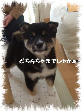 2007 11 20 あずきちゃん①