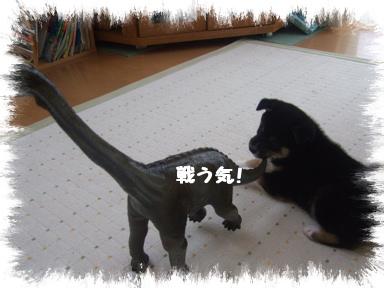 2007 11 20 あずきちゃん③ (2)