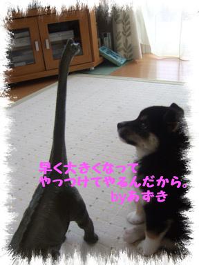 2007 11 20 あずきちゃん④ (2)