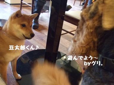 2007 11 29 シバキチカフェ④