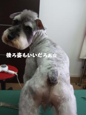 2007 12 1 しゅうくん④