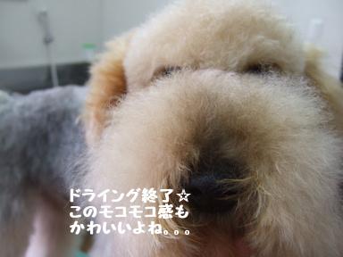 2007 12 2ロックくん④