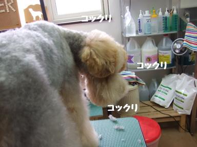 2007 12 2ロックくん⑤
