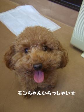 2007 12 4 モンちゃん①