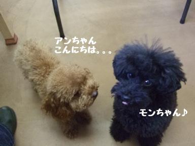 2007 12 4 モンちゃん②
