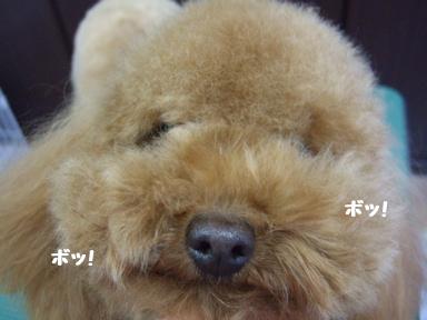 2007 12 4 モンちゃん⑤