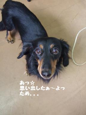 2007 12 6 タメちゃん②