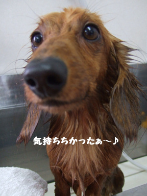 2007 12 6 タメちゃん⑤
