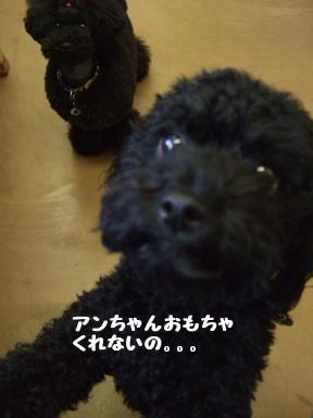 2007 12 6 パフ&クリン②
