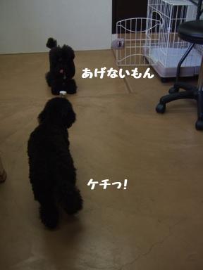 2007 12 6 パフ&クリン③