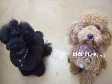 2007 12 7  はなちゃん
