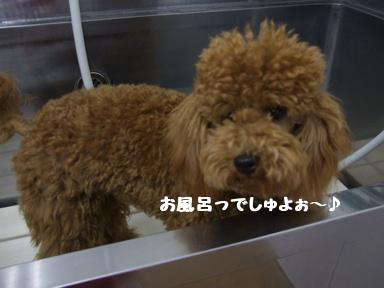 2007 12 7  はなちゃん④