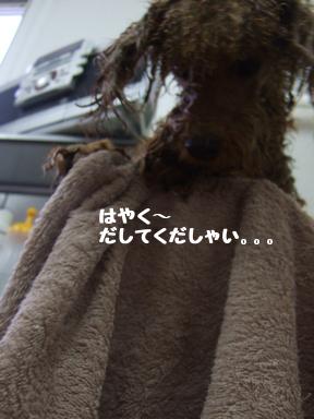 2007 12 7  はなちゃん⑤