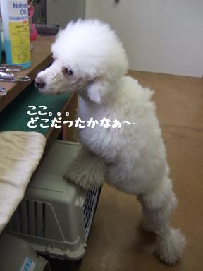 2007 12 8  ホイップちゃん②