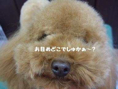 2007 12 9 モンちゃんいらっしゃい④