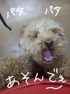 2007 12 16 ムッシュくん①