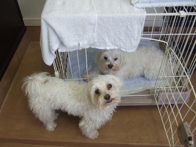 2007 12 17  ジミー&マロン①