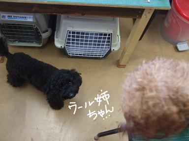 2007 12 21 ウールとアロア②
