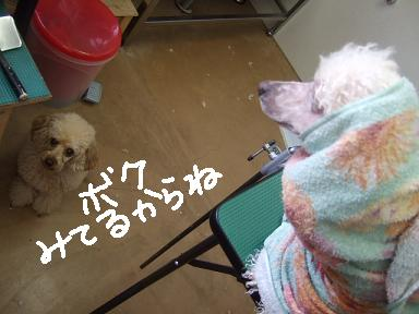 2007 12 22 アニカちゃん③