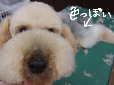 2007 12 27 ロックくん④