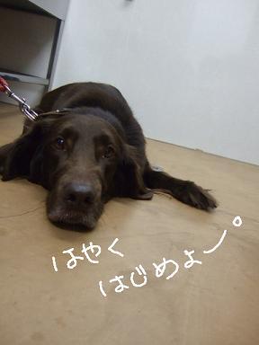 2007 12 27 レイラちゃん①