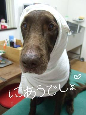 2007 12 27 レイラちゃん③