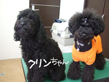 2008 1 6 パフ&クリン①