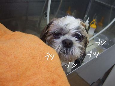 2008 1 13 バンちゃん②
