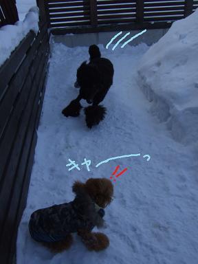 2008 2 14 午後お散歩~⑨