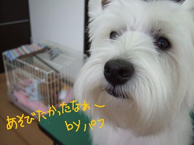 2008 2 15 パフちゃんあずきちゃんとはなちゃん④
