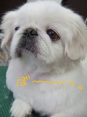 2008 2 18 ファルコン③