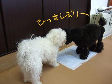 2008 2 25 マロン&ジミー③
