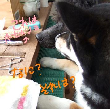 2008 2 26 あずきちゃん④