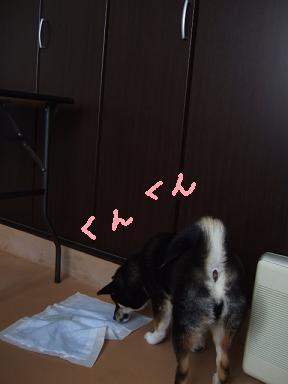 2008 2 26 あずきちゃん⑤