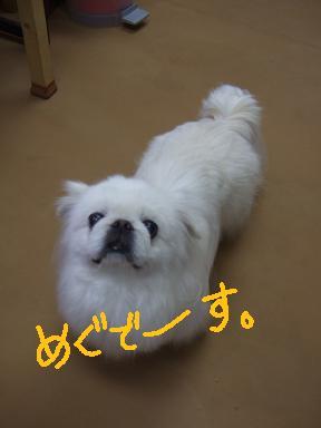 2008 2 28  めぐちゃん①