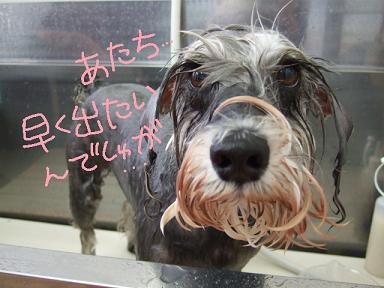 2008 3 3  チェリーちゃん②