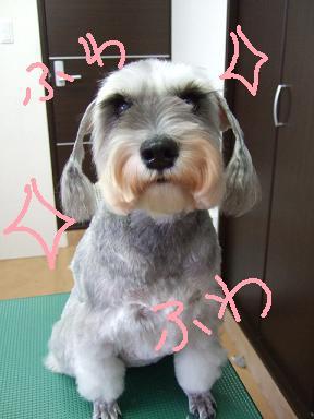 2008 3 3  チェリーちゃん③