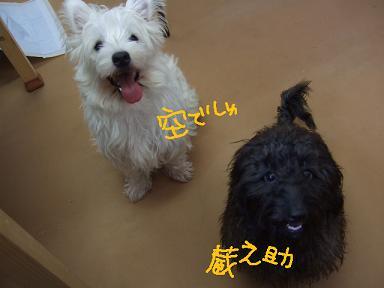 2008 3 4 モネ&空&蔵ちゃん①