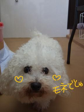 2008 3 4 モネ&空&蔵ちゃん②