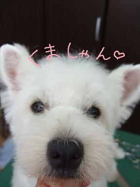 2008 3 4 モネ&空&蔵ちゃん⑧