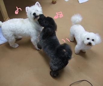 2008 3 4 モネ&空&蔵ちゃん⑭