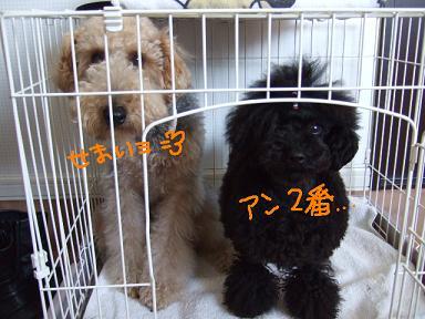 2008 3 9 ロックくん②