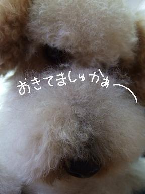 2008 3 9 ロックくん④