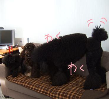 2008 3 10 カンちゃんきたぁ~①