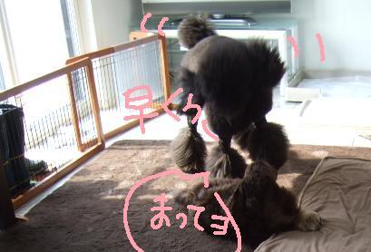 2008 3 10 カンちゃんきたぁ~②