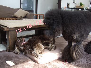 2008 3 10 カンちゃんきたぁ~③