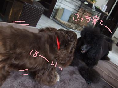 2008 3 10 カンちゃんきたぁ~④